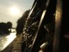 Autour du pont des Arts : cadenas enlacés